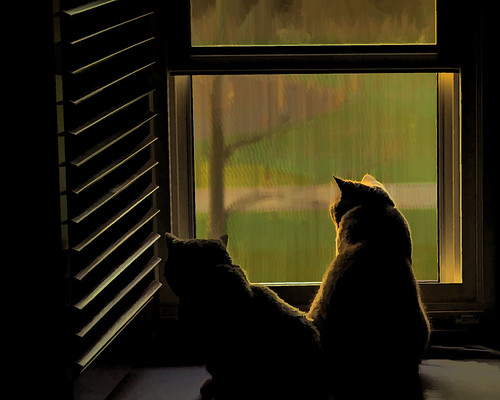 Cats in the Window | by Vin Kane