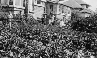 Home garden, 1918 | by OSU Special Collections & Archives : Commons