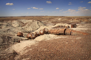 Petrified Forest, Arizona | by minniemouseaunt