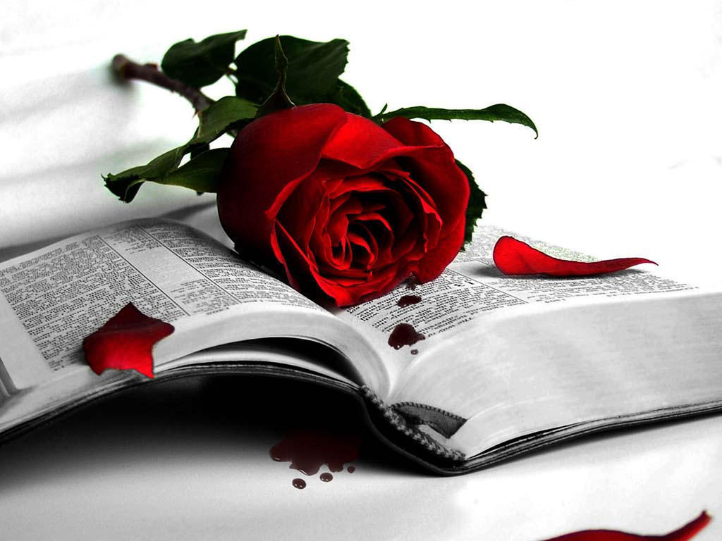 Wonderful Love Me Red Rose Wallpaper 2 Dr Muhammad Tayyab Flickr