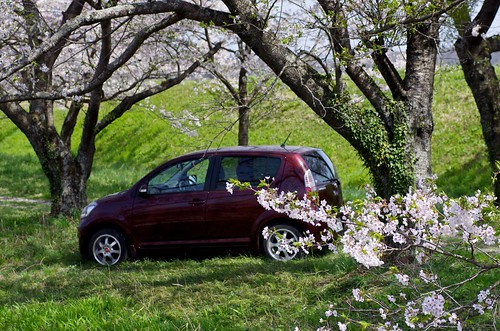Sakura and Car | by tez-guitar