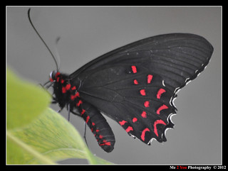 Butterfly World S 036 | by Me 2 You Photography 600,000+ Views