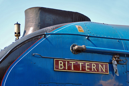 4464 Bittern | by Ian Gater Photography