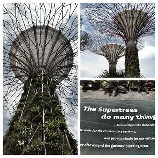 we need more of these supertrees! | by skinnydiver