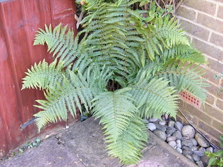 British Fern | by Austin7nut