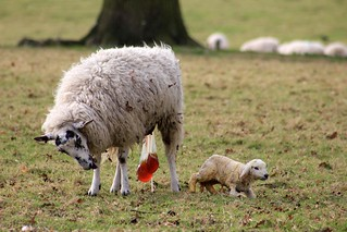 Ickworth Park (NT) 10-03-2012 | by Karen Roe