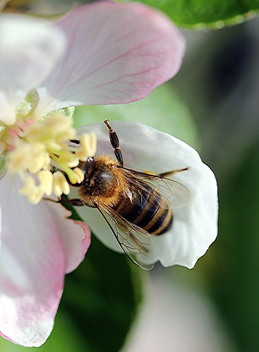 bee | by *LINNY *