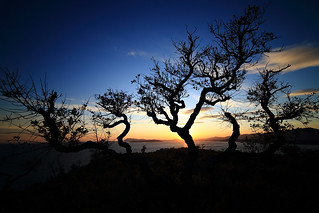 The Twisted Trees on a Sunset Backlight | by Yann LECOEUR Photography