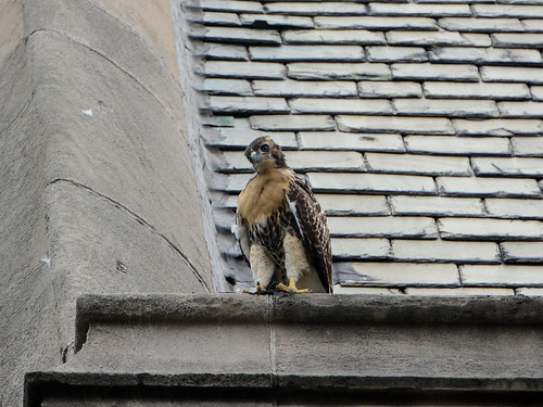 Cathedral RT Fledge 2 - 9047