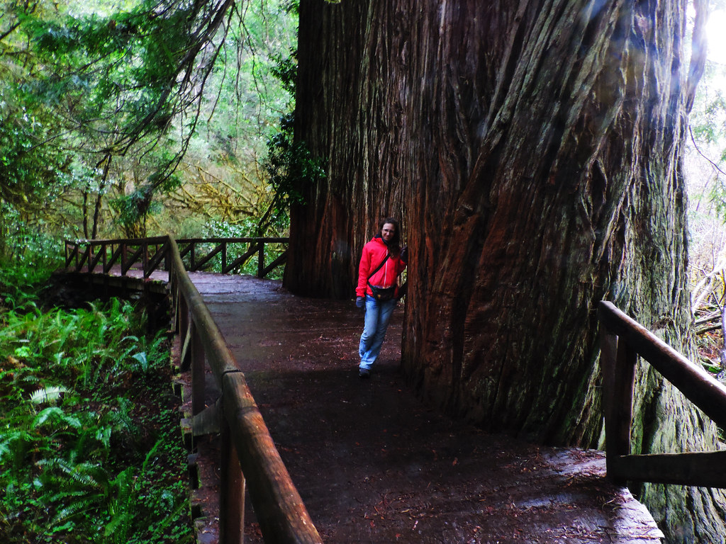 Redwood National and State Parks, CA, USA