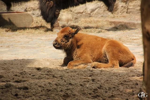 Sonntags-Besuch Zoo Berlin 19.06.201674