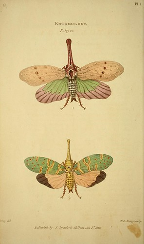 n29_w1150 | by BioDivLibrary