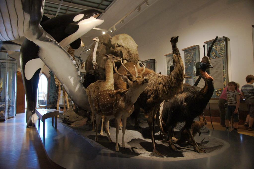 Bildergebnis für magdeburg museum naturkunde