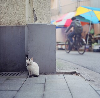 在這紛擾的世界裡,繼續淡定 In this world of imbroglios, I am a Zen cat | by ╮(╯_╰)╭...