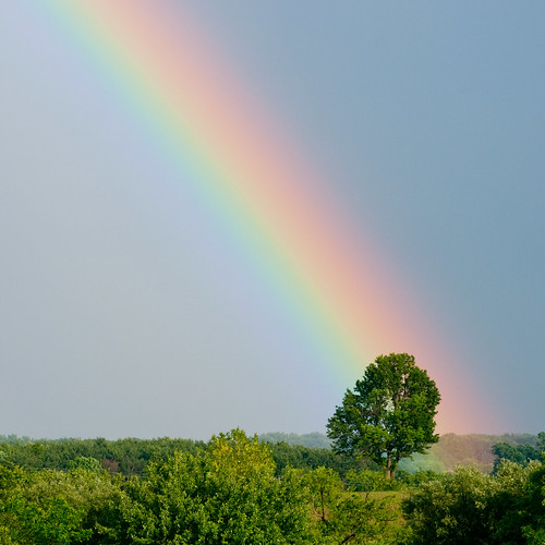 The Tree at the End of the Rainbow | by Jeff Sprang