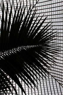 Fronds and lines | by Helen 74