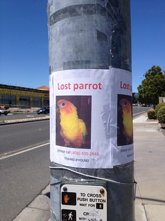 Lost Parrot | by digdog