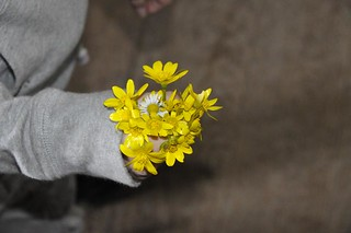 Lesser Celandines | by The Parkie