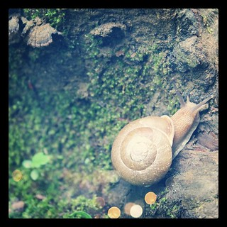 A pretty snail we found #nature #fbphotoadaymay | by Célèste of Fashion is Evolution