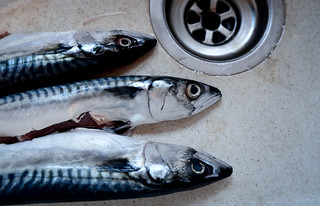 11th May 2012 - Mackeral | by The Hungry Cyclist