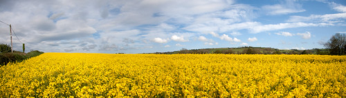 Rape Seed | by Brian Daly / Electricfoto
