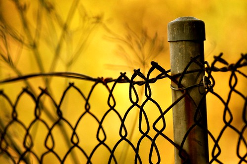 Happy Fence Friday (Explore) | by missgeok