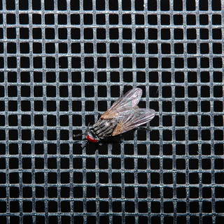 Fly screen | by Alberto Cavazos
