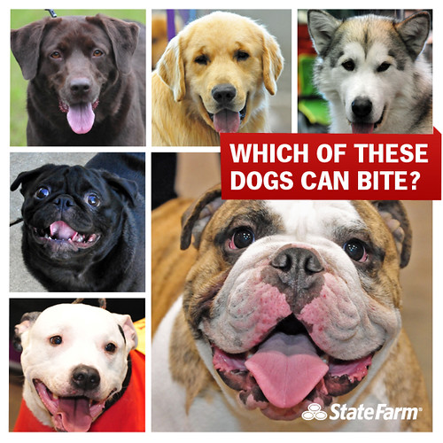 Can Dogs Understand Human Emotions Through Eye Contacts