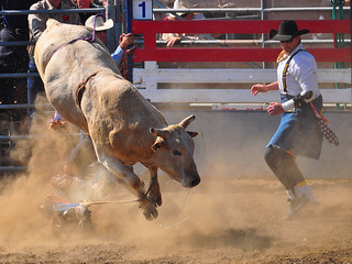 Bull Rider Down 2012 | by Bill Gracey 20 Million Views