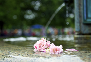 flower fountain | by davedehetre