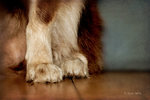 precious paws 22/52 | by sure2talk