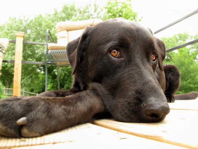 Moosie on the Deck