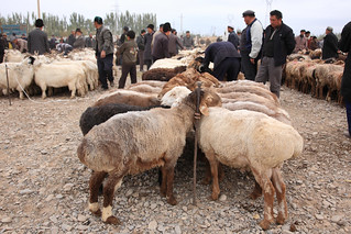 At Livestock market in Kashgar,Xinjiang, China | by kukkaibkk