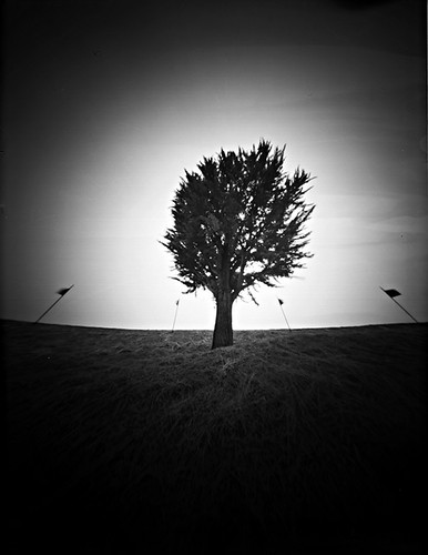 lone tree | by film forever