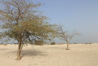 undp-kuwait-environment-energy-desert-tree-sustainability-nasser-alqatami | by undpkuwait