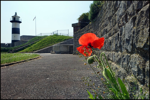 Poppy at the lighthouse | by southseadave