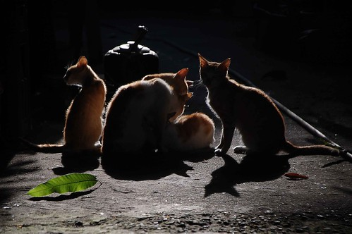 Alley Cats (6651) | by TheHouseKeeper