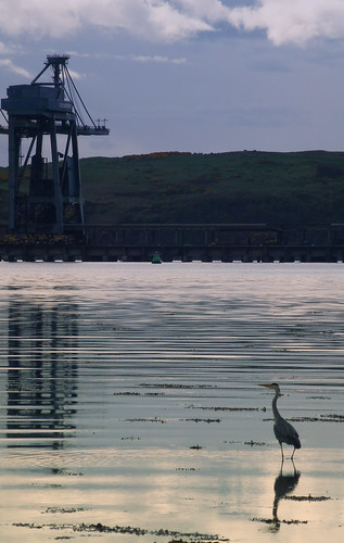 Blue Crane & Grey Heron | by g crawford