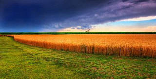 Kansas Summer Wheat and Storm Panorama | by JamesWatkins