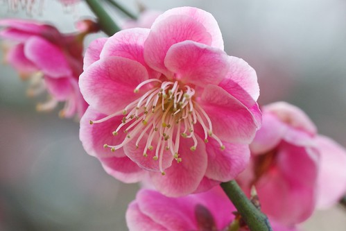 ume | by julesberry2001