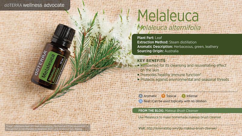 doTerra_Melaleuca