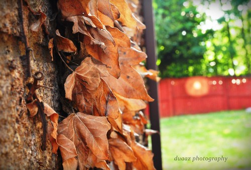 The Fall ... | by duaaz
