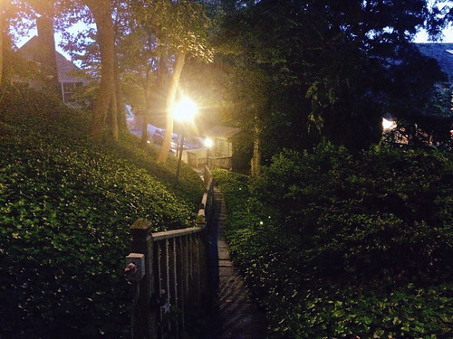 Ivy Pathways (May 29 2015)