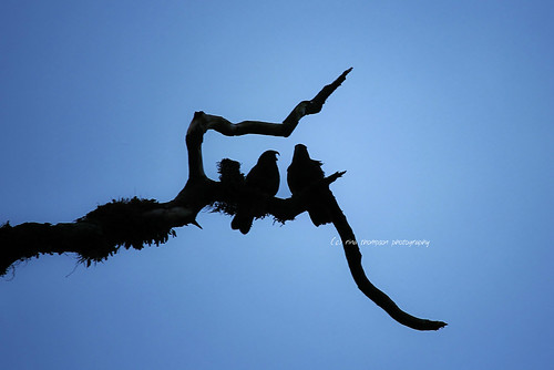out on a limb | by rina sjardin-thompson photography