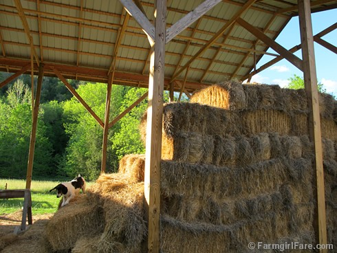 5-11-12 Friday Farm Fix #9 (20) | by Farmgirl Susan