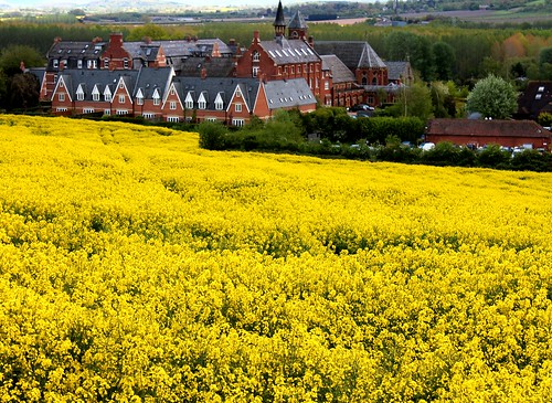St Micheals Hospice Rape Seed Field Herefordshire | by Leshaines123
