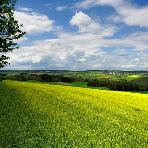 The yellow and green rapeseed of the Vulkaneifel | by B℮n