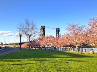 Steel Bridge in Portland with Cherry Blossom | by Evan-Lovely