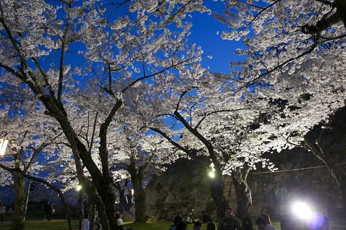Cherry Blossoms at Night at Morioka Castle Site Park