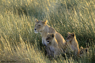 family at sunrise | by La Lince